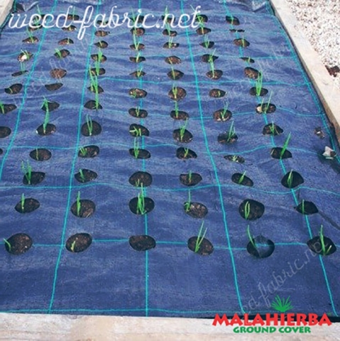 the weed fabric with holes for growth of the plants.