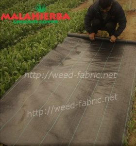 installation of ground cover fabric in garden
